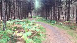 Thetford Forest, Norfolk, 11/15