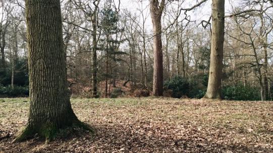 Sandringham, Norfolk, 15/02/15